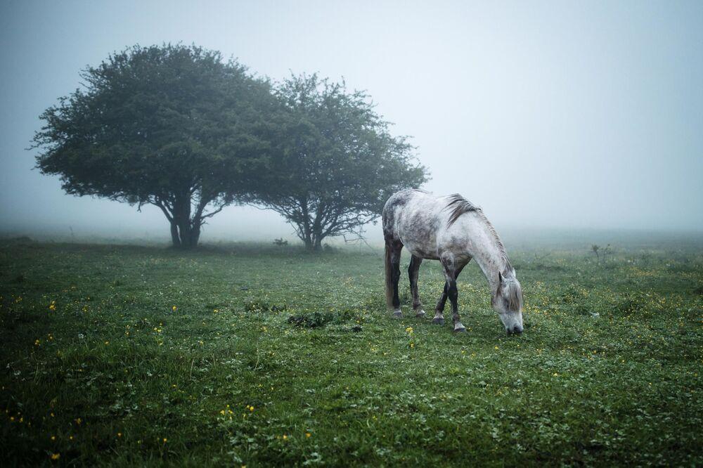 Um cavalo pastando em um prado no distrito de Maikop, República de Adigueia, Rússia