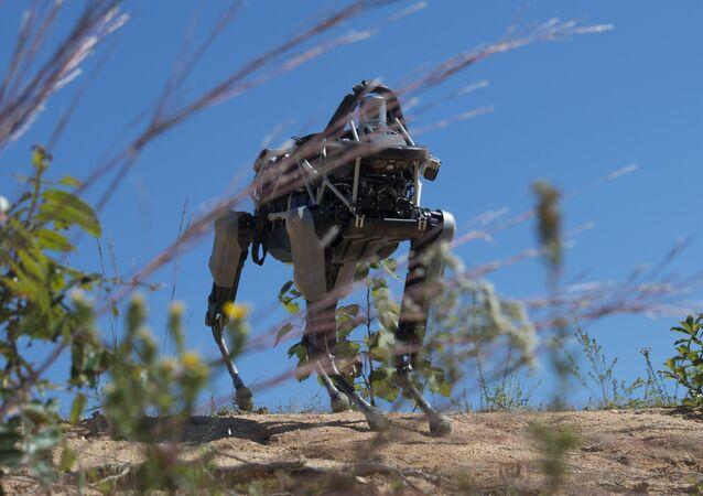 Robô-cachorro