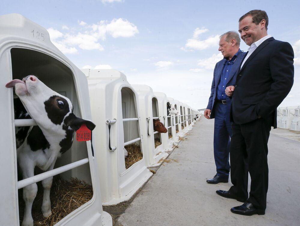 Primeiro-ministro russo Dmitry Medvedev durante visita à empresa agrícola Zarechye, na região de Voronezh, Rússia