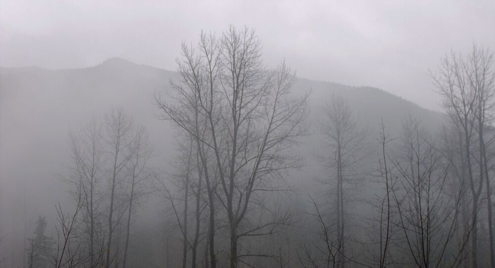 Floresta (imagem referencial)