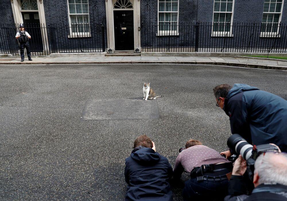Repórteres fotografam Larry, o gato, do lado de fora da Downing Street 10 em Londres, Grã-Bretanha, 11 de junho de 2019