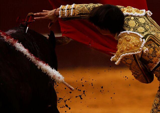 Toureiro peruano Andres Roca Rey empurra espada contra touro durante tourada na praça de touros Malagueta em Málaga, no sul da Espanha, em 14 de agosto de 2017 (imagem de referencia)