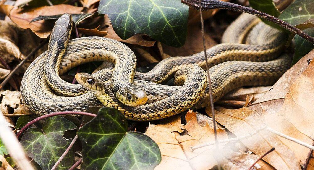 Cobras (imagem de arquivo)