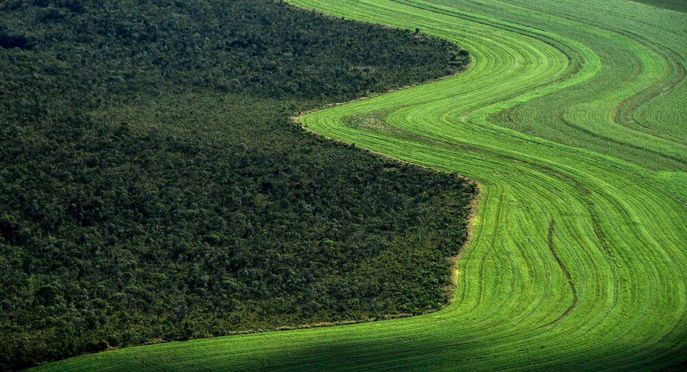 Vista aérea de plantações ao lado do Cerrado, no município de Formosa do Rio Preto, Bahia