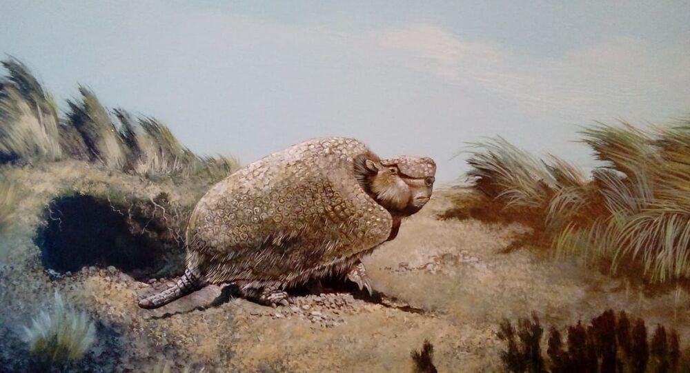 Tatu pré-histórico que viveu na América (imagem referencial)