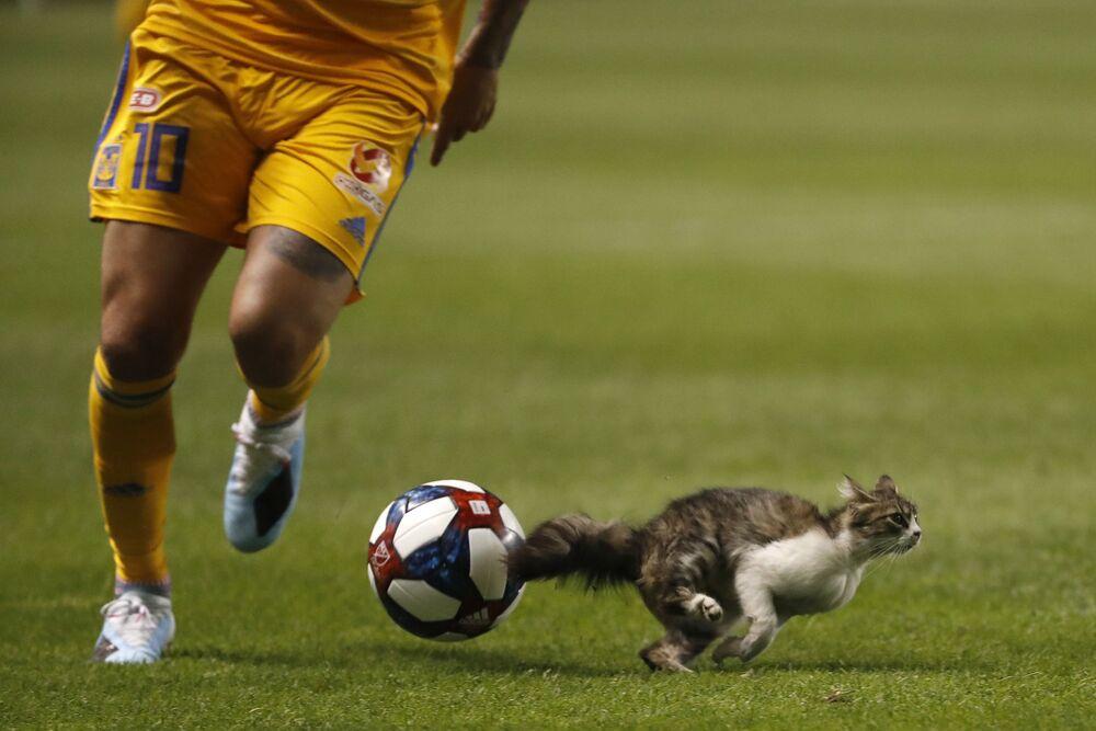 Gato entra no campo durante jogo de futebol entre Tigres UANL e Real Salt Lake nos EUA