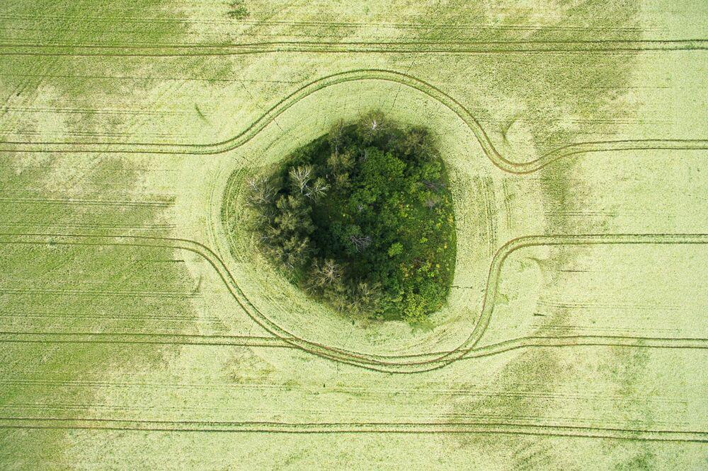 Campos de trigo-mourisco florescendo, Rússia