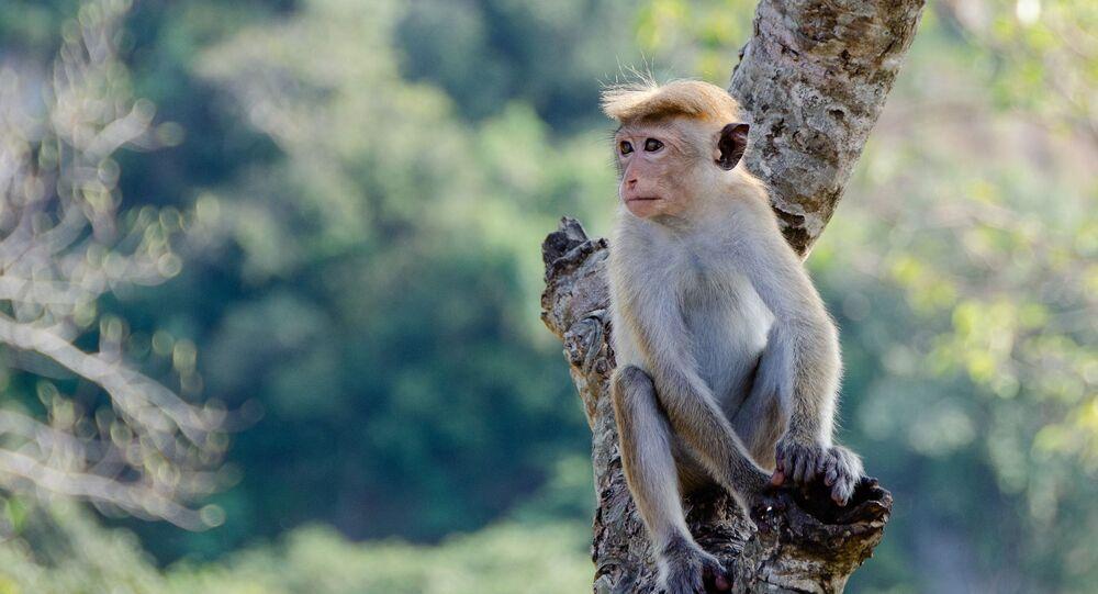 Macaco no galho (imagem referencial)