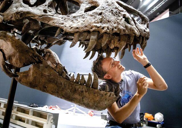 Paleontóloga Anne Schulp durante a reconstituição do esqueleto do tiranossauro no museu Naturalis, na Holanda