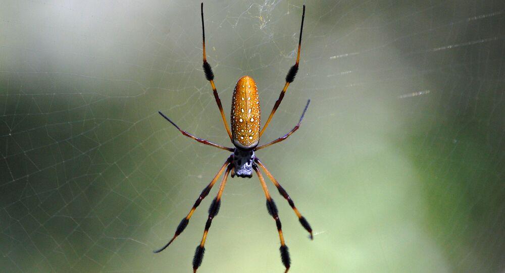 Aranha-tecedeira