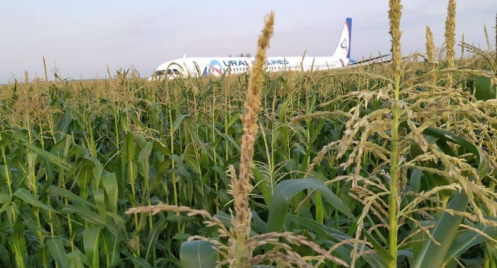 Avião após pouso forçado em uma plantação de milho (imagem referencial)