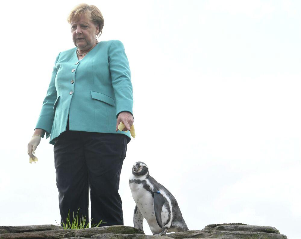Chanceler da Alemanha Angela Merkel dando de comer a pinguins na cidade de Stralsund, no norte da Alemanha