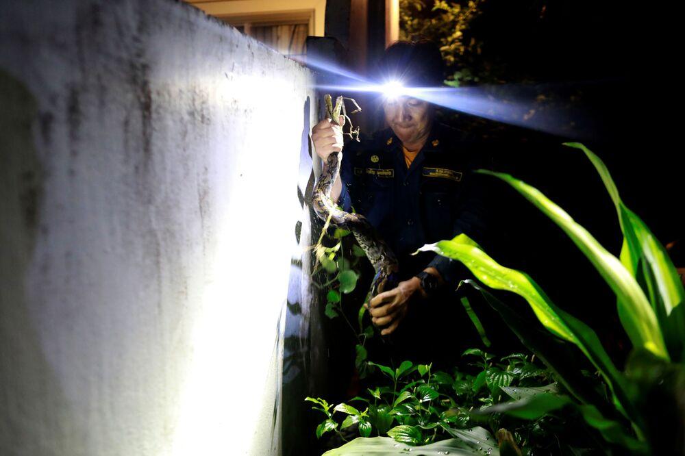 Bombeiro Pinyo Pukpinyo capturando píton em Bangkok