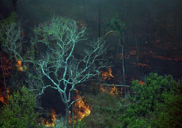 Vegetação em chamas na floresta Amazônica
