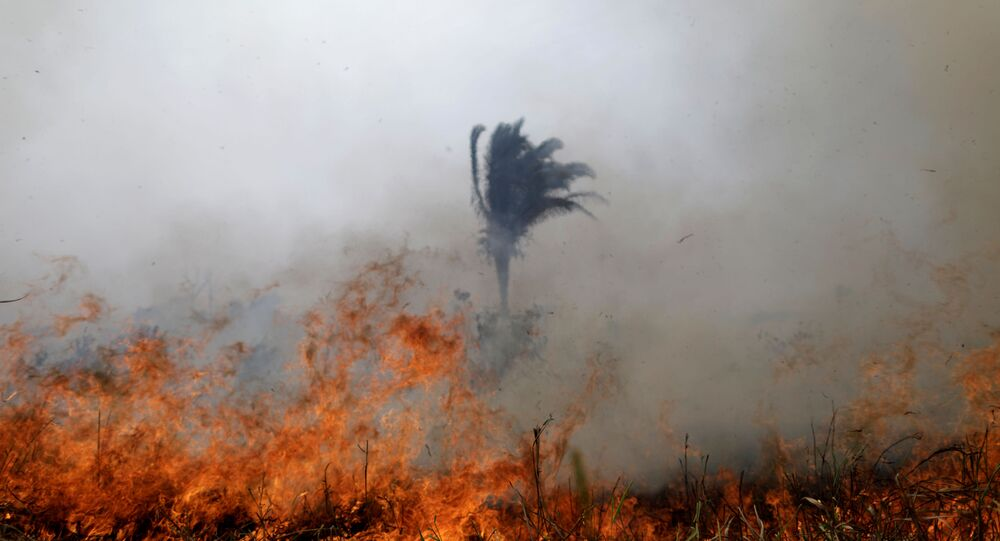 Incêndios na Amazônia, 24 de agosto de 2019