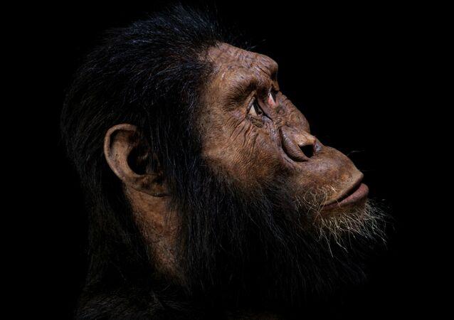Reconstrução facial, feita por John Gurche, da espécie Australopithecus anamensis, baseada em fóssil craniano descoberto em 2016 na Etiópia