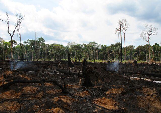Queimada é vista em área de plantação próximo à praia de Lábrea, no Amazonas, em setembro de 2019