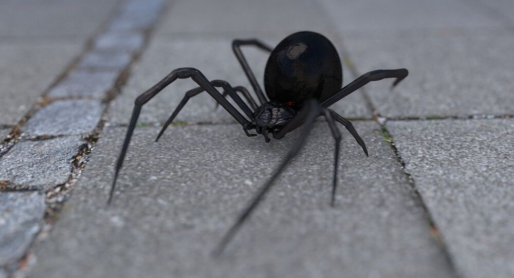 Aranha (imagem referencial)