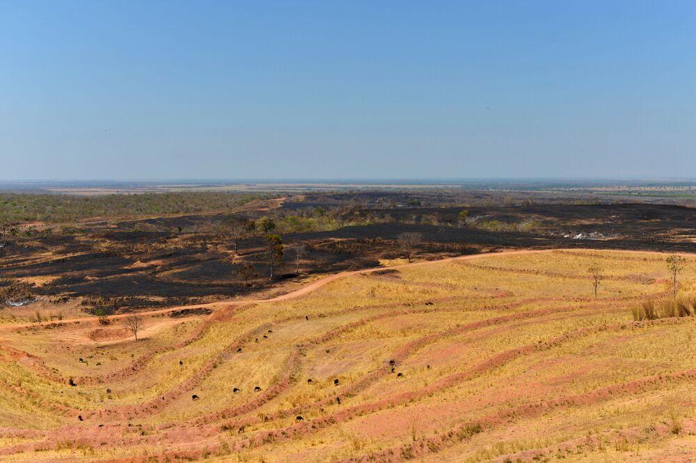 Área desmatada e queimada, vista em território indígena, é usada como pasto para gado em Areões, Mato Grosso, Brasil, 4 de setembro de 2019