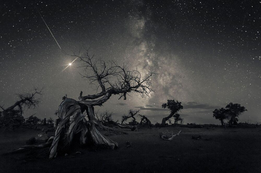 Foto feita pelo fotógrafo chinês Wang Zheng, que ganhou o 1º lugar na categoria Skyscapes, no concurso Insight Investment Astronomy Photographer of the Year 2019, exibe árvores secas na Mongólia