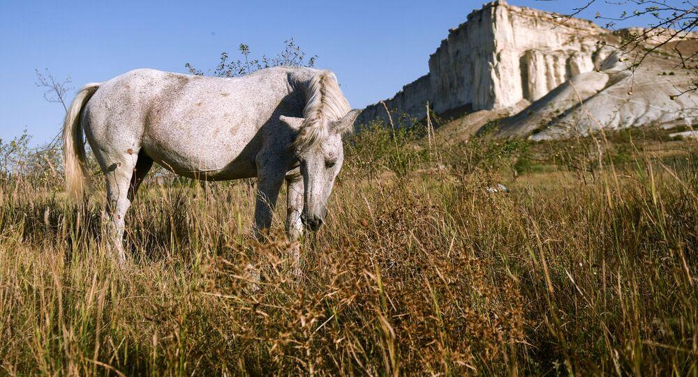Cavalo pasta perto do monumento natural Rocha Branca, na Crimeia, Rússia