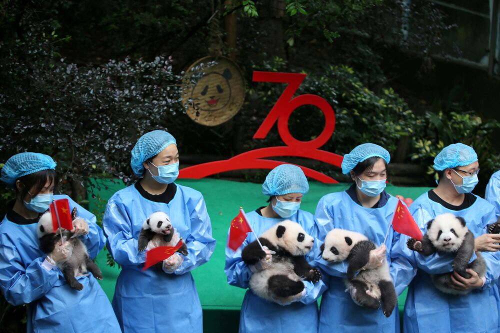 Cuidadores de animais chineses seguram filhotes de panda durante evento de celebração dos 70 Anos da República Popular da China em Chengdu, China