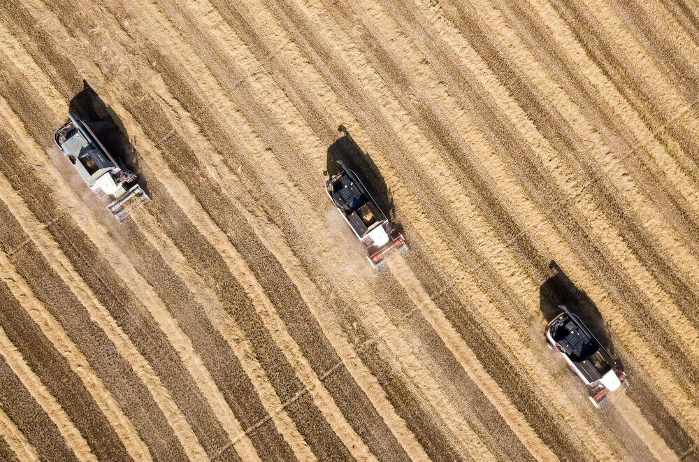 Colheita e processamento de arroz na região russa de Krasnodar