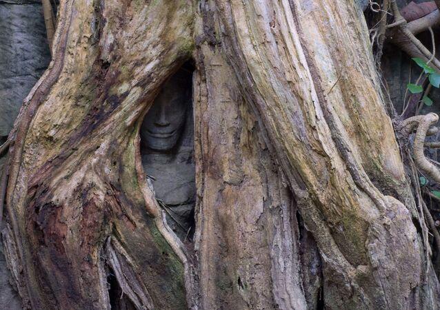 Estátua sorridente dentro do buraco de uma árvore no templo budista de Ta Prohm, no Camboja (imagem referencial)