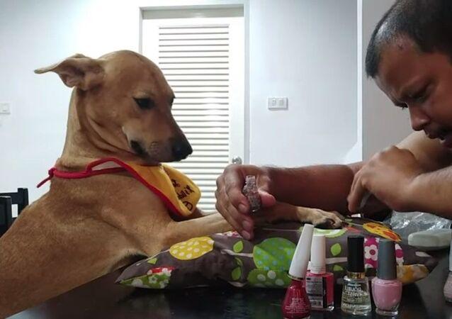 Homem pinta as unhas de seu cachorro.