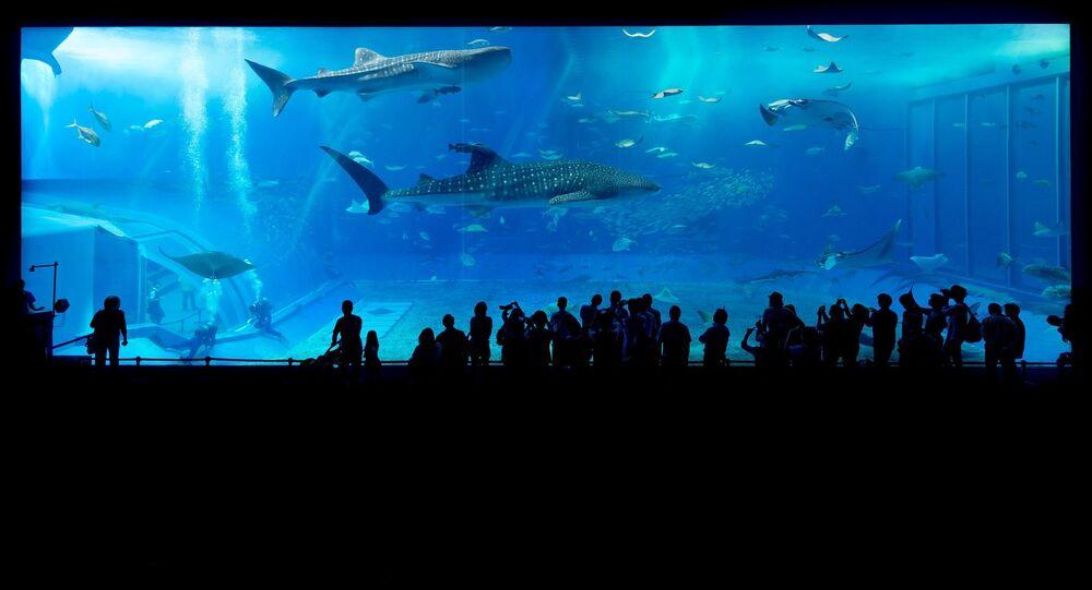 Visitantes de zoo diante do aquário