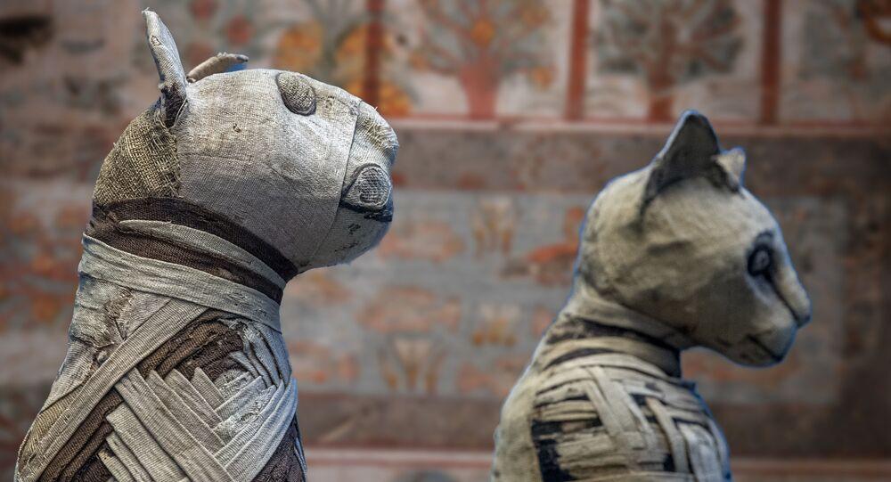 Gatos egípcios mumificados