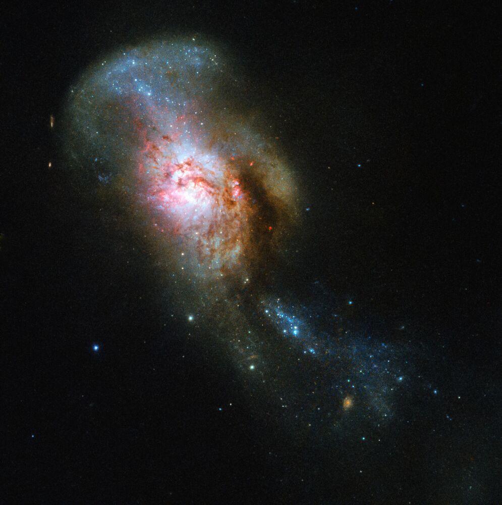 Imagem do objeto NGC 4194, chamado de Fusão da Medusa, obtida com a ajuda do telescópio Hubble