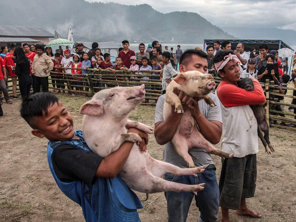 Participantes de uma celebração cristã na Indonésia carregam porcos em Muara, próximo ao lago de Toba. Foto tirada em 25 de outubro