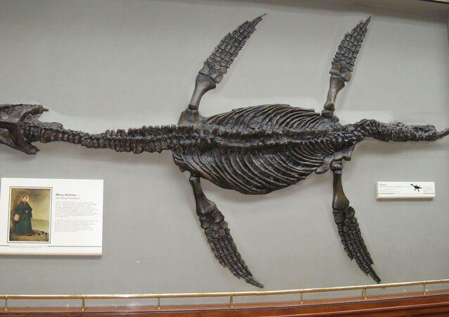 Pliossauro