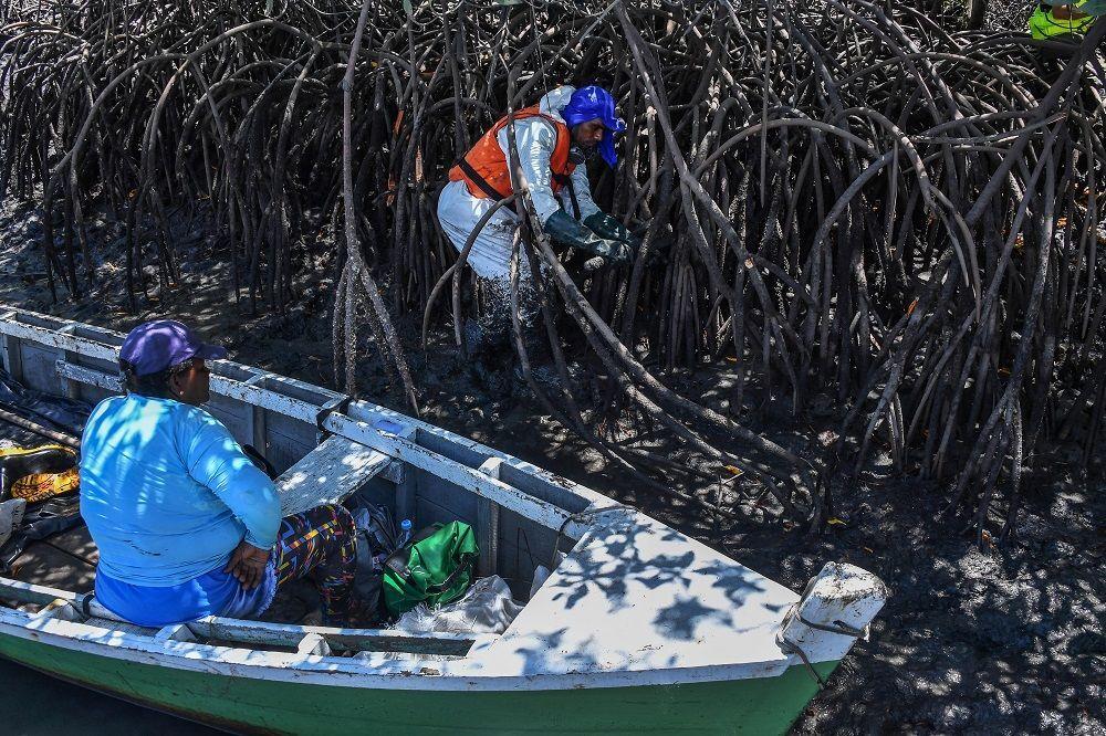 Voluntário removento petróleo de mangue afetado por derramamento de óleo no Atlântico