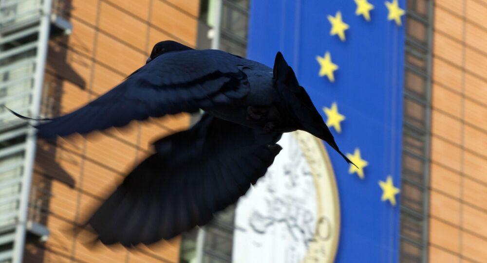 Pombo voa perto de cartaz da União Europeia (imagem referencial)