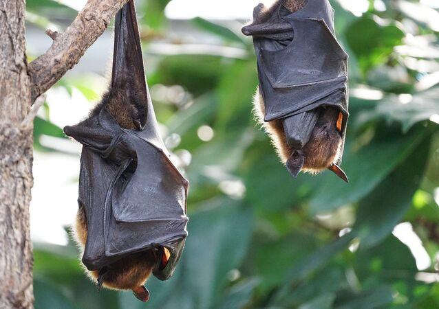 Morcegos (foto de arquivo)