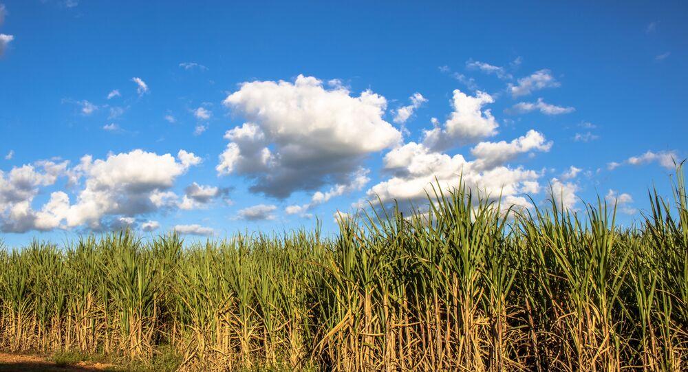 Plantação de cana-de-açúcar no município de Borá, região centro-oeste do Estado de São Paulo.