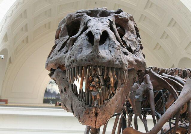Fóssil de dinossauro em museu (foto de arquivo)