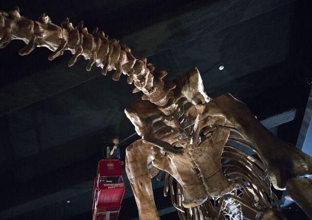 Limpeza de dinossauro