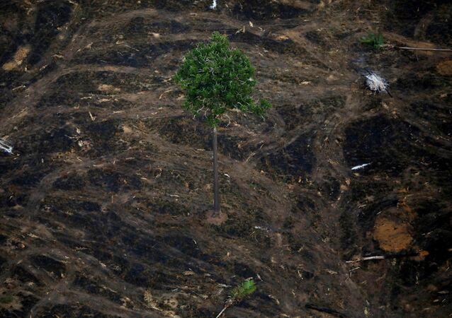 Área desmatada nas proximidades de Porto Velho, Rondônia.