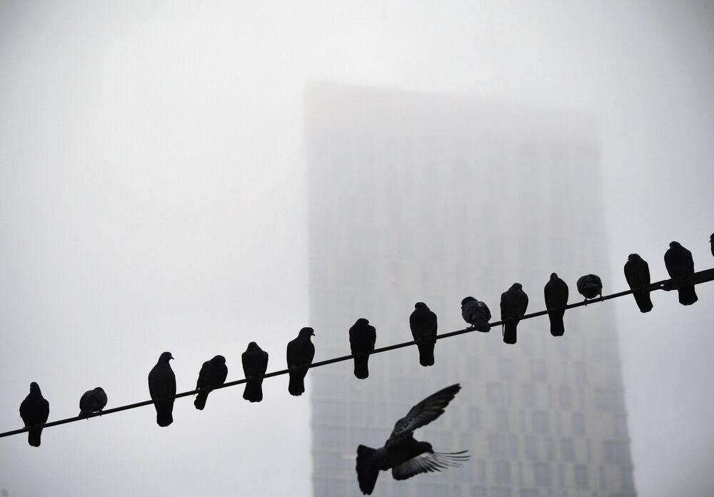Pombos pousados sobre um fio na capital russa de Moscou