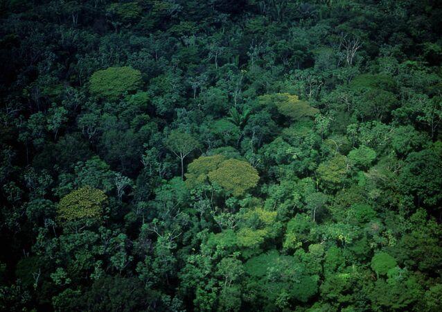 Vista aérea da Floresta Amazônica, na região da rodovia Santarém-Cuiabá, a BR-163, no Pará