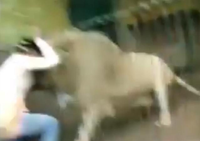 Leão ataca tratado em zoo do Paquistão