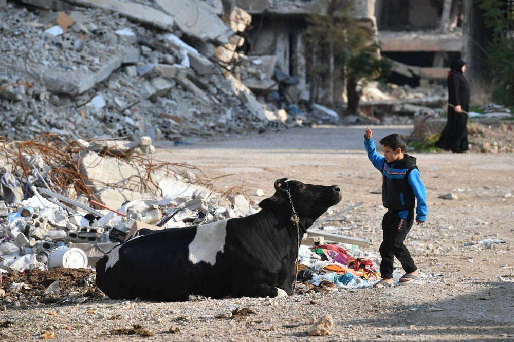 Menino sírio brinca com vaca em Kharasta, no subúrbio de Damasco
