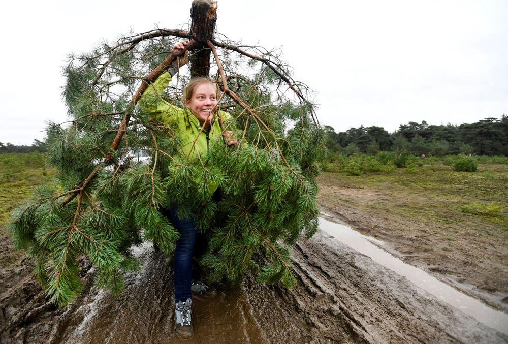 Mulher carrega pinheiro grátis para árvore de Natal no Parque Nacional Hoge Veluwe, na Holanda