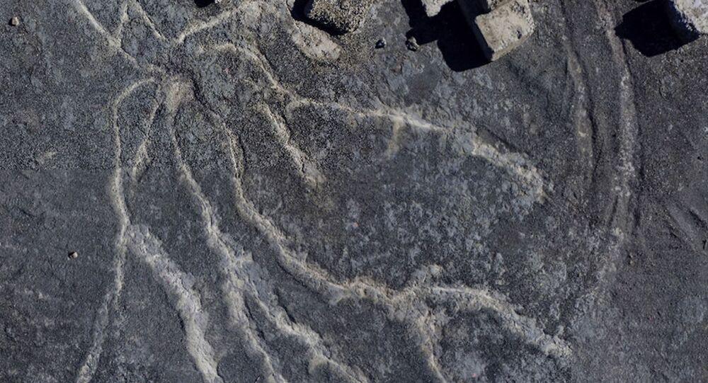Vista aérea mostrando as raízes do bosque de 386 milhões de anos