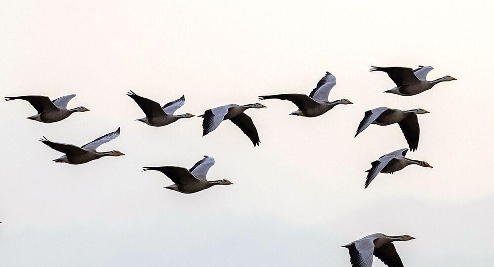 Passaros voando em grupo