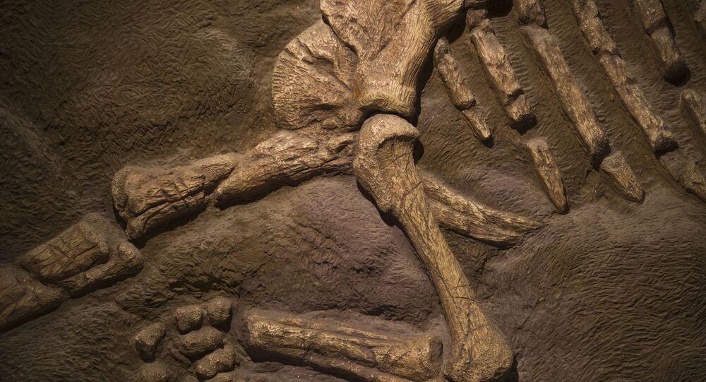 Ossos de dinossauro (foto de arquivo)