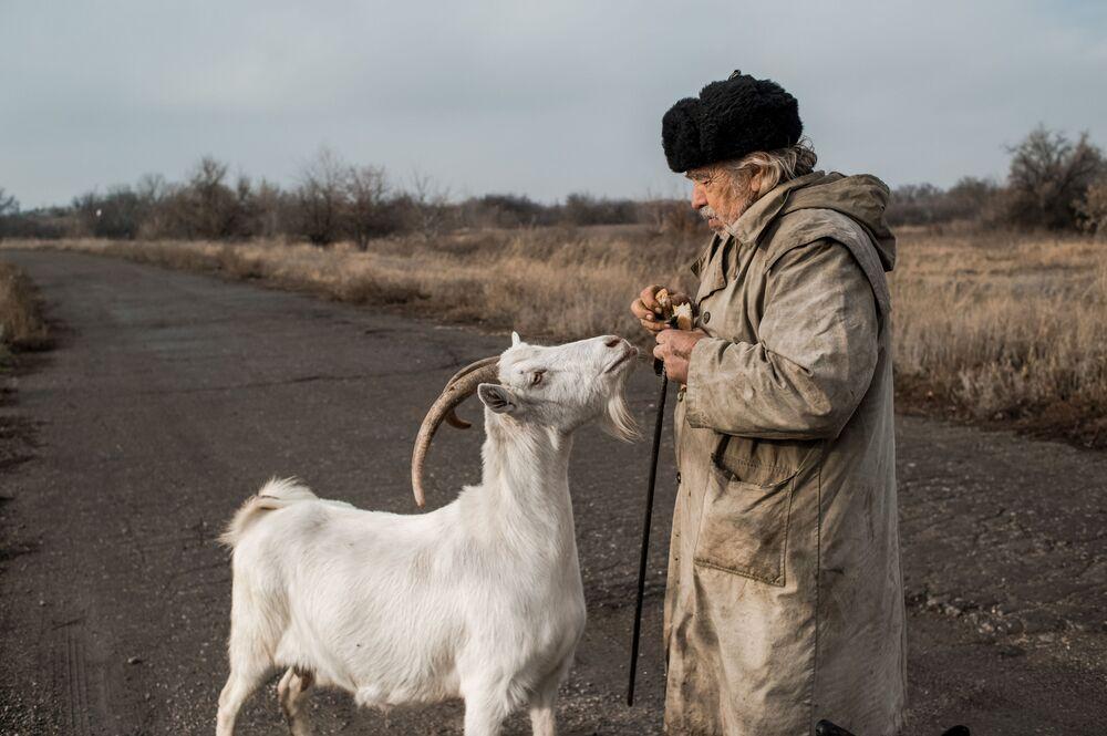 Idoso alimenta um bode no vilarejo de Donetsky na República Popular de Lugansk